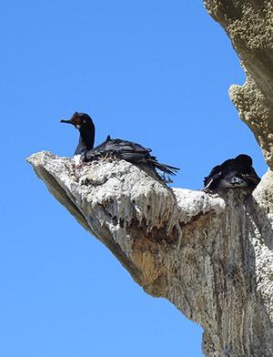 Aves Loayza